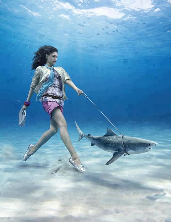 ... The Ocean, Pets, Art, Water World, Underwater Photography, Sharkweek